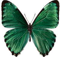 butterfly200-@2x
